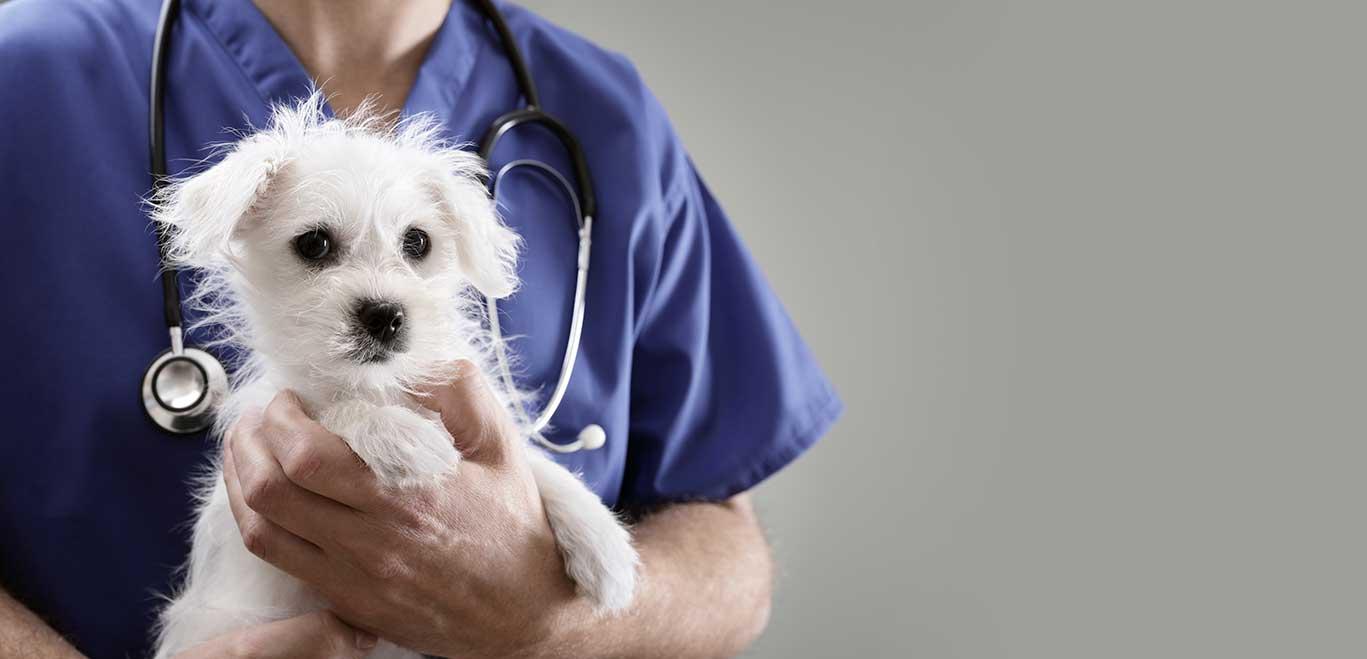 Dr Stéphanie Delnooz | vétérinaire à Luc-sur-Mer